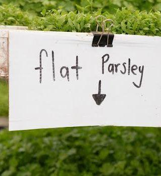 flat parsley compressed