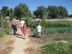 peppergreen-farm