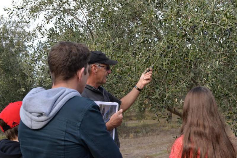 Salute Oliva Farm Tour 2015 Quality of Olives