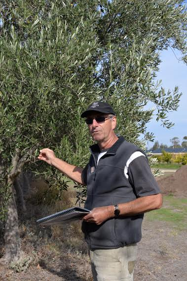 Salute Oliva Farm Visit 2015 Peter in the grove