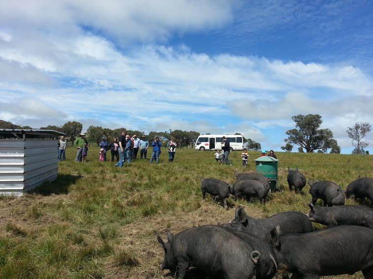 McIvor Farm Tour